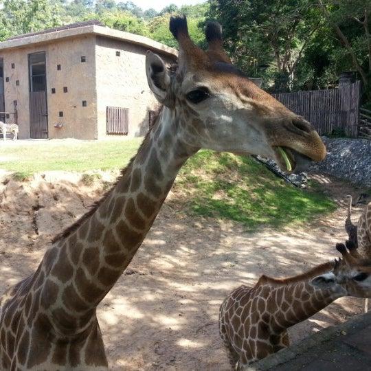 Photo taken at สวนสัตว์เปิดเขาเขียว (Khao Kheow Open Zoo) by Лариса Ж. on 12/14/2012