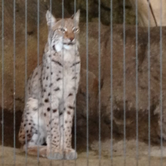 Photo taken at Lincoln Park Zoo by Suchit on 11/18/2012