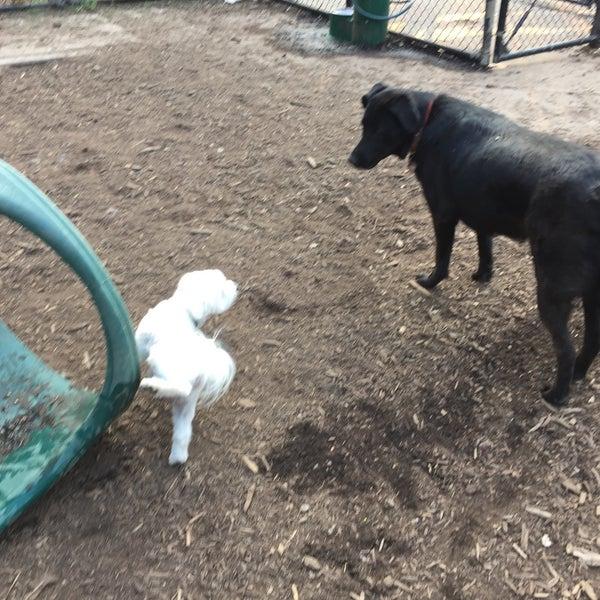 Photo taken at Cunningham Park Dog Run by Michael C. on 6/9/2015
