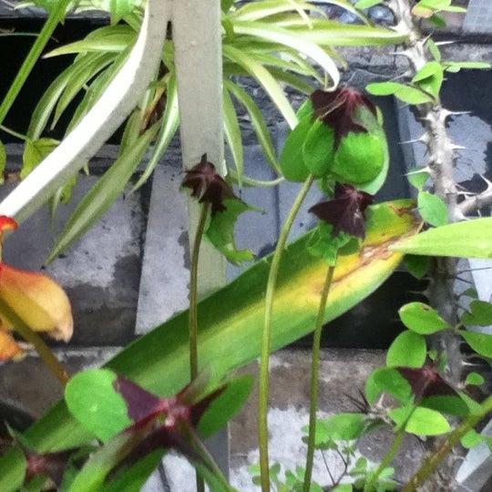 Photo taken at Parque Ecologico Huayamilpas by Gloria on 9/29/2012