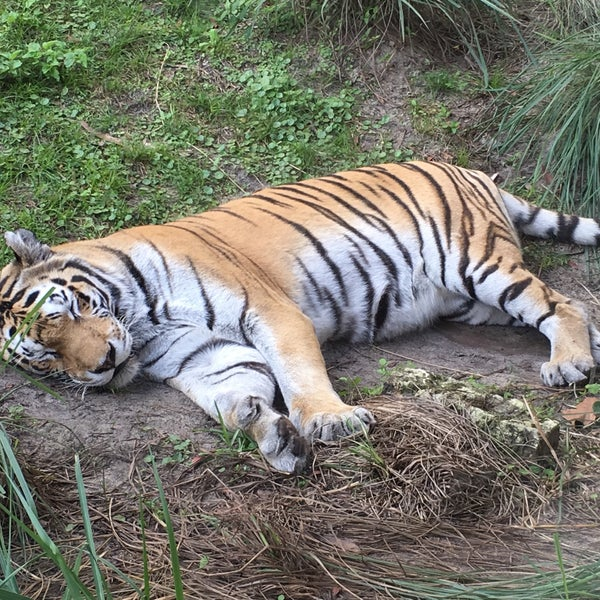 Photo taken at Maharajah Jungle Trek by Melissa T. on 11/24/2015