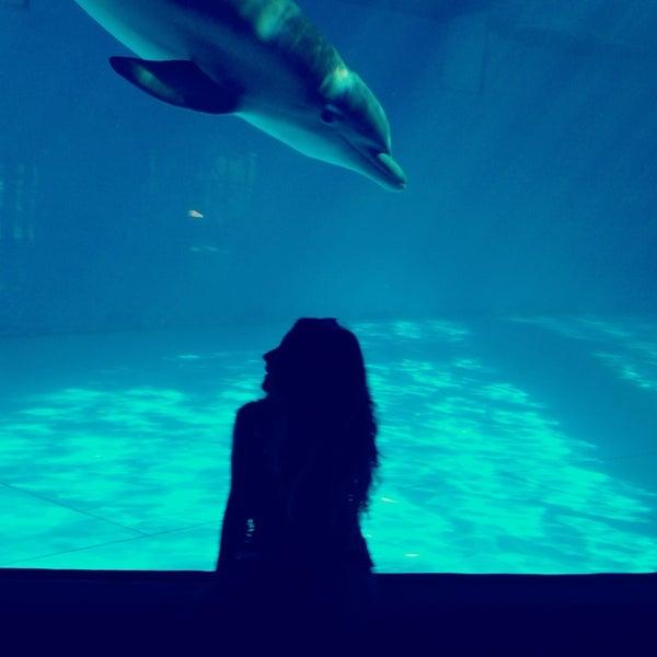 Photo taken at National Aquarium by Gozde K. on 6/4/2013