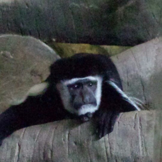 Photo taken at Lincoln Park Zoo by Yuliya S. on 6/9/2013