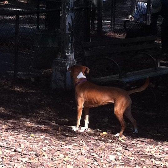 Photo taken at Marcus Garvey Park - Dog Run by Foladé on 10/2/2011