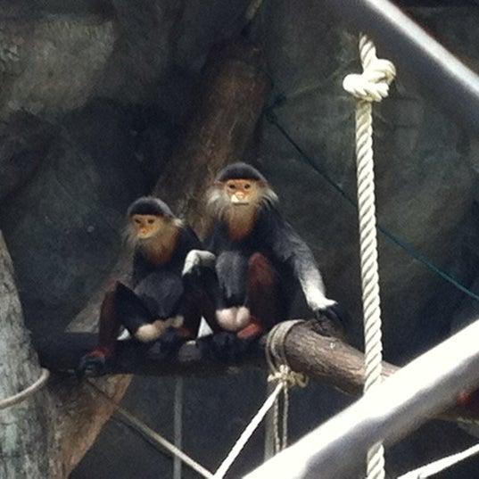 Photo taken at Khao Kheow Open Zoo by Meawie.wieee on 7/14/2012