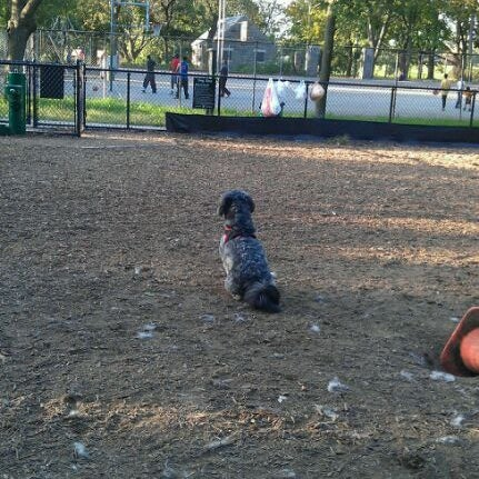 Photo taken at Cunningham Park Dog Run by Stefanie A. on 9/19/2011