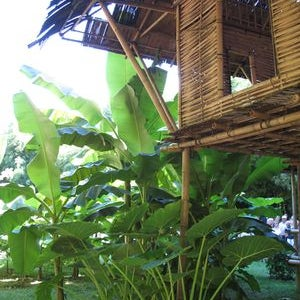 Jardins et botanique for Boulevard jardin botanique