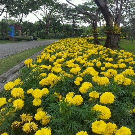 ดอกไม้งาม:-)