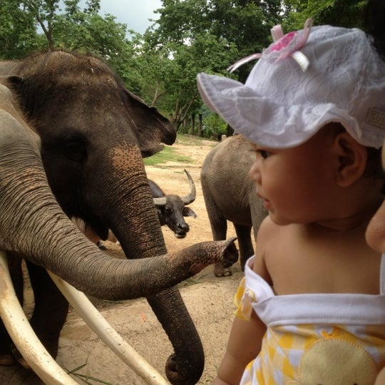 Photo taken at Khao Kheow Open Zoo by สุภานี ศ. on 4/14/2012