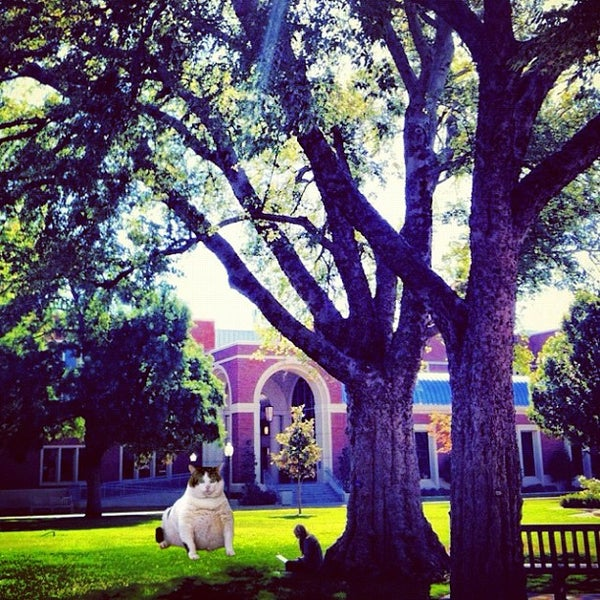 Photo taken at South Oval by Cassie K. on 9/12/2012