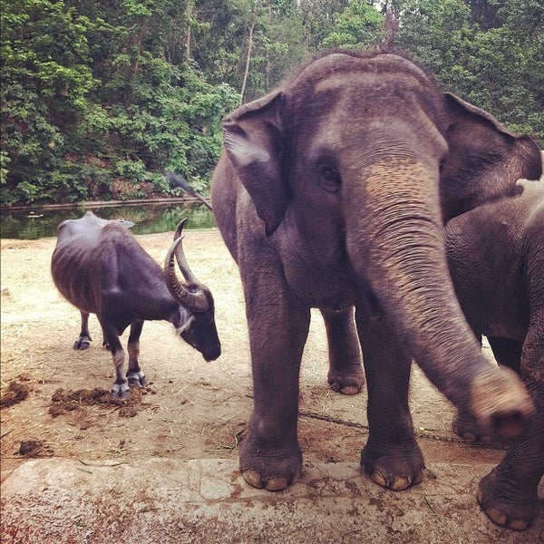 Photo taken at สวนสัตว์เปิดเขาเขียว (Khao Kheow Open Zoo) by Pic P. on 3/31/2012