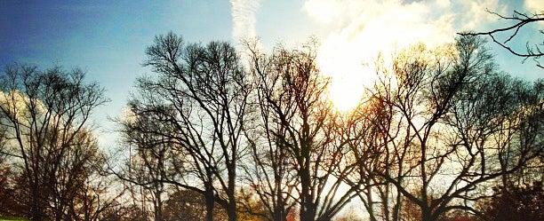 Photo taken at Arnold Arboretum by Steve G. on 11/12/2012