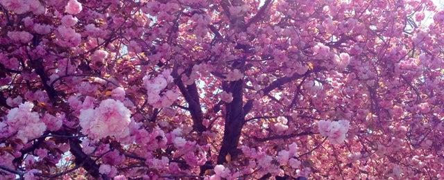 Photo taken at Atrium at Treetops by Kenya on 4/24/2014