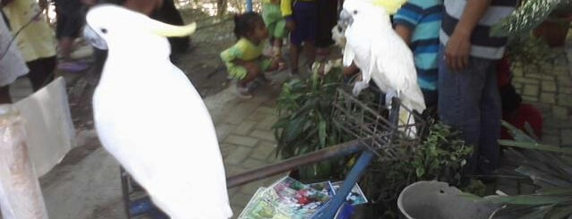 kebun binatang Tinjomoyo, Mangkang, jawa Tengah is one of Favorite Great Outdoors.