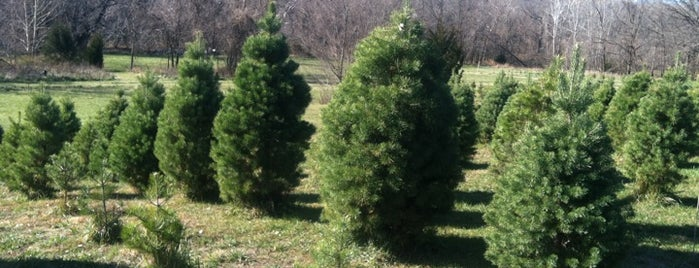 Midland Holiday Pines is one of Rachel's tips.