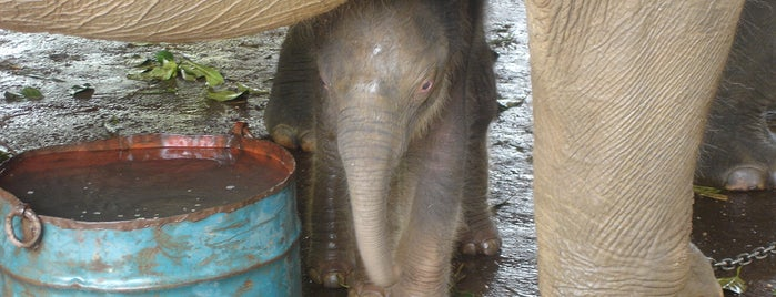Pinnawela Elephant Orphanage is one of Trips / Sri Lanka.