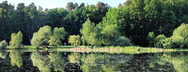 Покровское-Стрешнево (природно-исторический парк) is one of Парки севера Москвы.