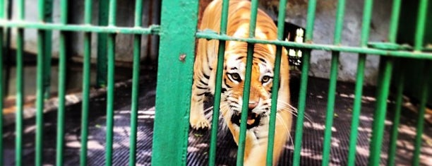 Trivandrum Zoo is one of Guide to Trivandrum's best spots.