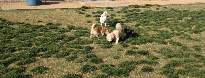Desert Breeze Dog Park is one of las vegas.