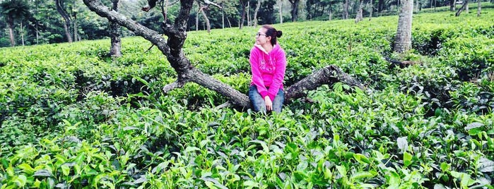 Kebun Teh Wonosari is one of A local's guide: 48 hours in Malang, Indonesia.
