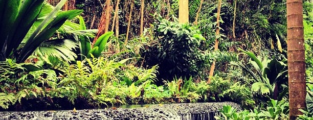 Singapore Botanic Gardens is one of Singapore to do list.