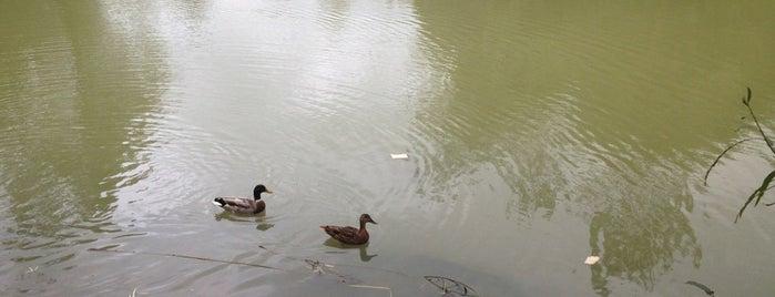 Fishing Pond @ old Savernake Rd is one of Corsham.