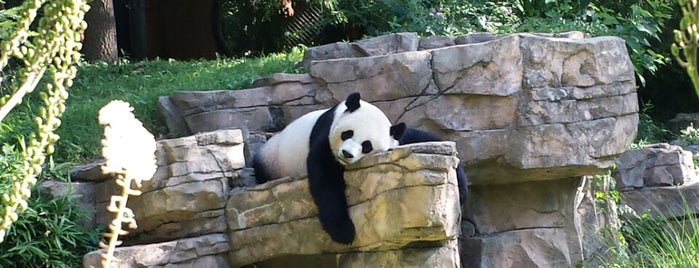 Smithsonian National Zoological Park is one of DC To Do - Activities.