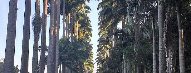 Jardim Botânico do Rio de Janeiro is one of My Brazil.