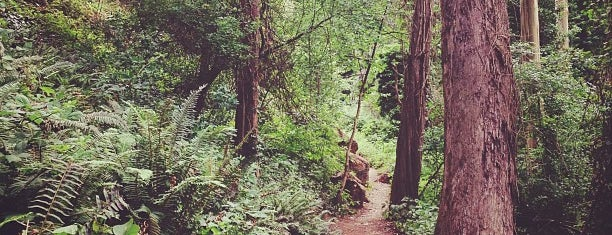 Sutro Forest is one of Must-visit Parks in San Francisco.