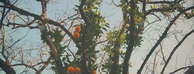Orange Grove is one of Destinations: The San Fernando Valley+.