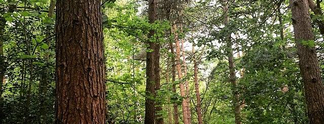 Pine Woods is one of Guide to Harrogate's best spots.