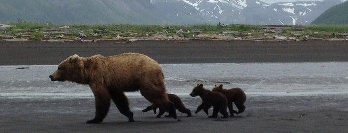 Katmai National Park is one of U.S. National Parks.