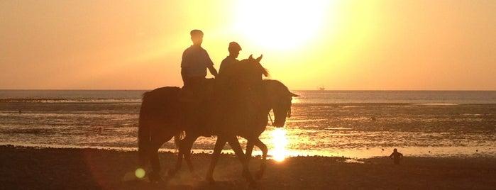 Playa Sanlúcar de Barrameda is one of 101 cosas que ver en Andalucía antes de morir.