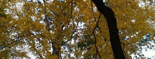 Blendon Woods - Sugarbush Trail is one of Columbus Area Parks & Trails.