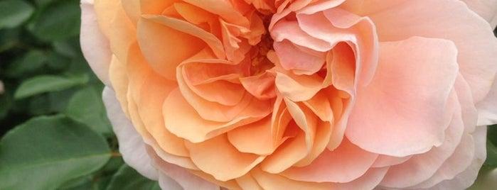 Queens Botanical Garden is one of Flavorpill's Tips.