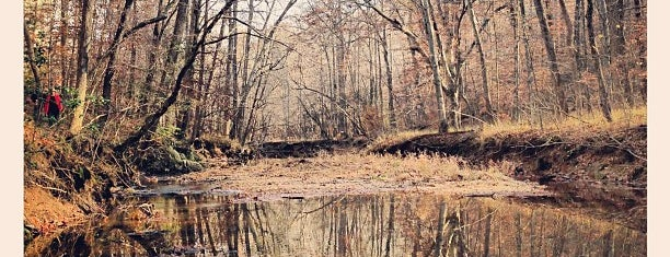 Prince William Forest Park is one of National Parks.
