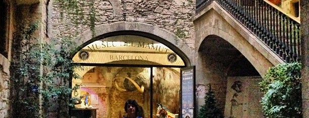Museo del Mamut de Barcelona is one of Barcelona.