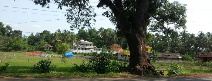 Nemmara is one of Best places in Palakkad, India.