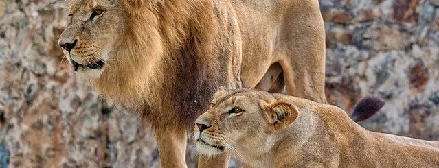 Zoológico de Cali is one of Top 10 Mejores Lugares de Cali.