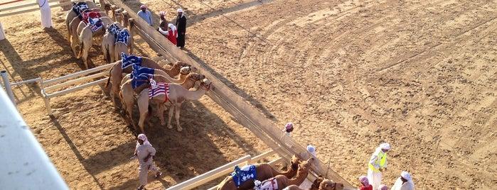 Dubai Camel Racecourse is one of World Sites.