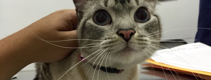 Laurel Pet Hospital is one of Pet friendly!.