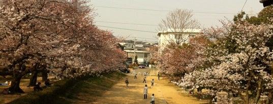 岩ケ平公園 is one of 公園.