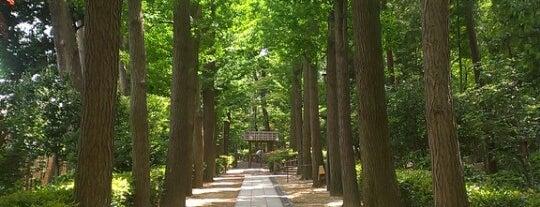 杉並区立 大田黒公園 is one of 気になる場所.