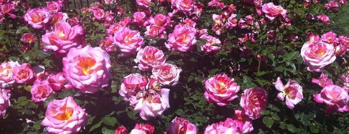 San Jose Municipal Rose Garden is one of South Bay.