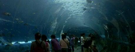 Chiangmai Zoo Aquarium (เชียงใหม่ ซู อควาเรียม) is one of Guide to the best spots Chiang Mai|เที่ยวเชียงใหม่.