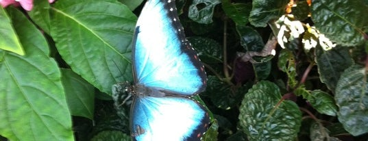 Butterfly House at Faust County Park is one of Best places to visit in St. Louis, MO  #visitUS.