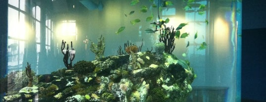 South Carolina Aquarium is one of Charleston, SC #visitUS.