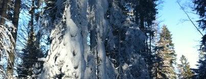 Ski Zones
