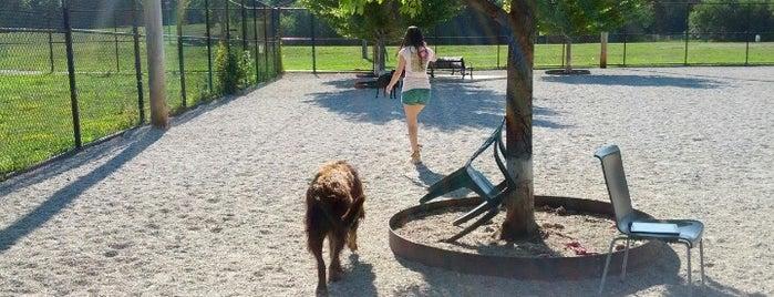 Memorial Park Dog Park Medina Oh