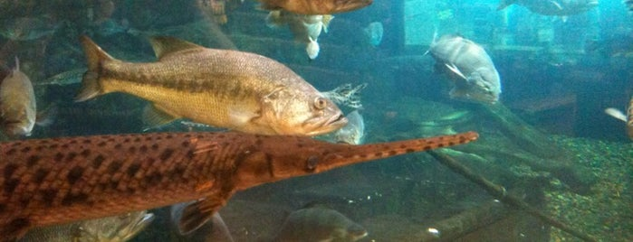 Bass Pro Shops is one of * Gr8 Dallas Shopping (non-grocery).